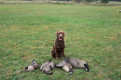 Gunner & his Geese